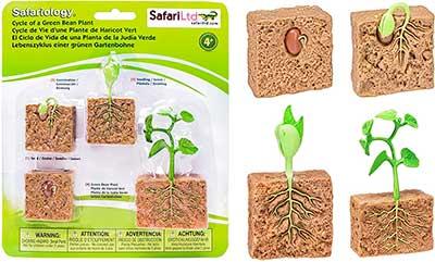 modelo de crecimiento de planta