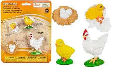 ciclo vital de las gallinas de juguete