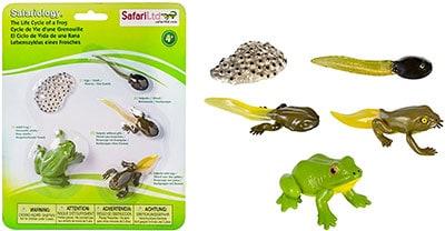 material montessori de biologia animal